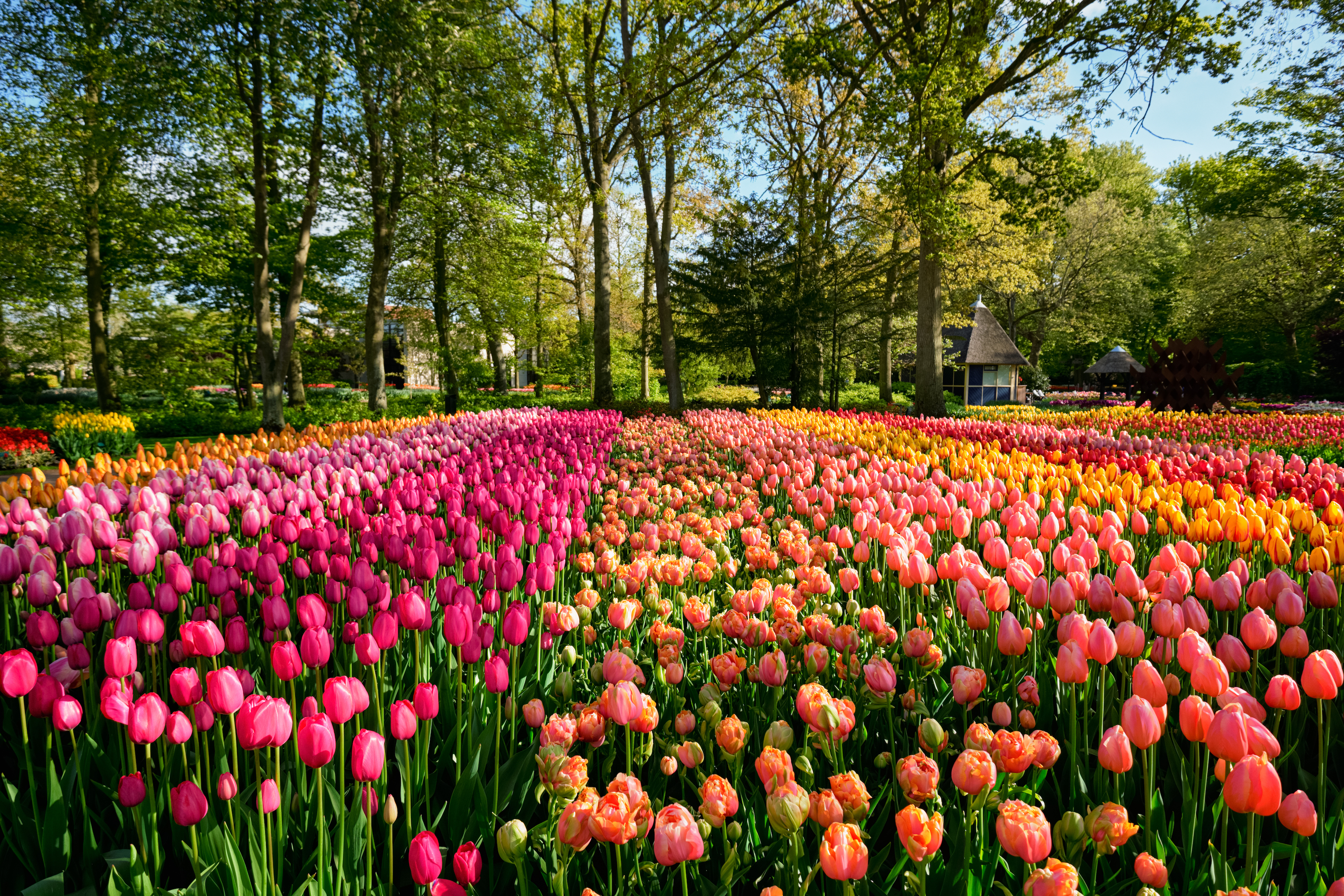 Keukenhof Gardens South Holland S Springtime Homage Netherlands