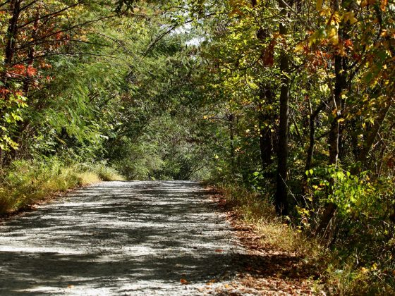 Townsend, Tennesee (trail in forest)