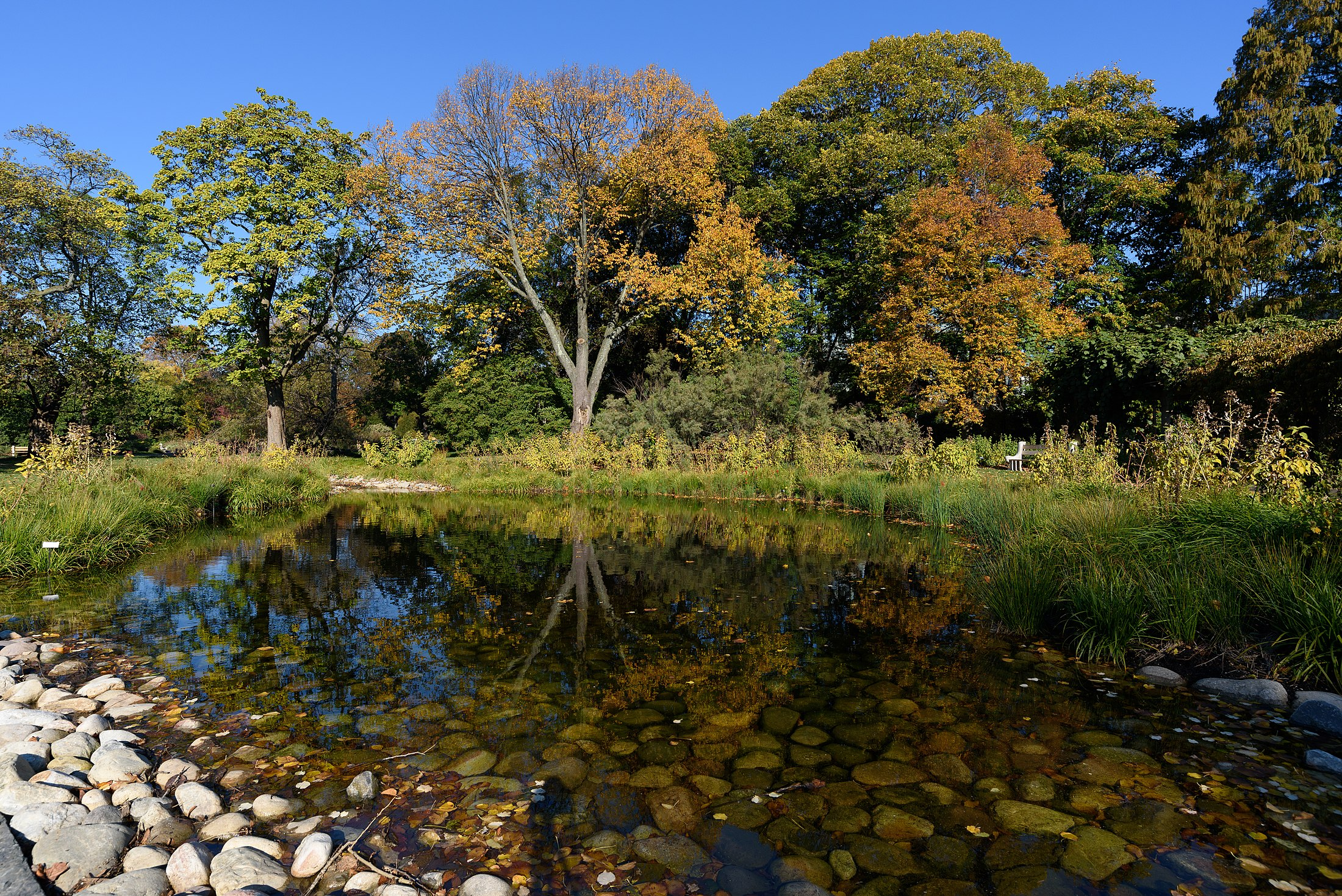 Brooklyn Botanic Garden Cherry Trees Aquatic Plants And Bonsai Trees United States